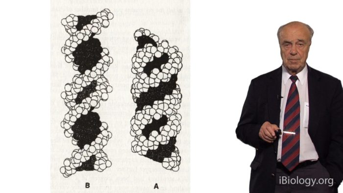DNA and the Nobel Prize: The History of the Discovery of DNA Structure