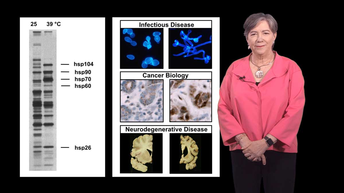 Protein Folding in Infectious Disease and Cancer (Part 1a): Susan Lindquist