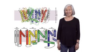 Introduction to Ion Channels: A close look at the role and function of potassium channels: Lily Jan