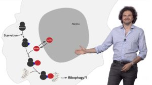 Part 3: Ribophagy and Nucleotide Recycling