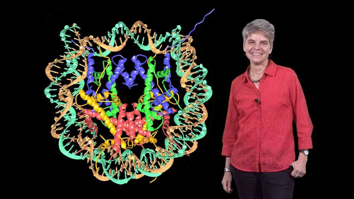 Discovery of the Structure of the Nucleosome: Karolin Luger