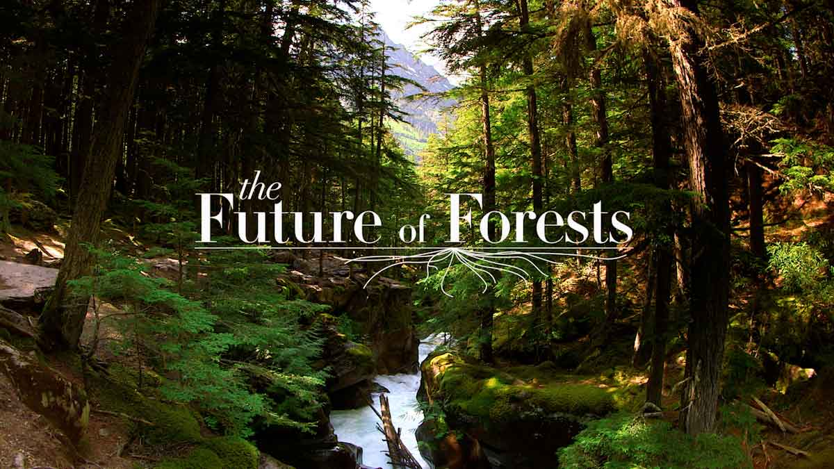Future of Forests